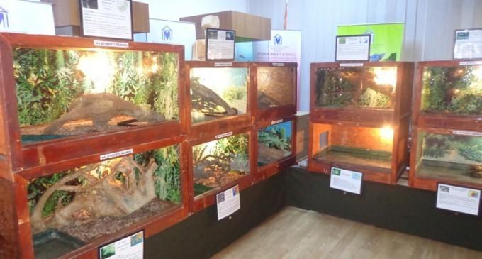 La muzeul din Curtea de Argeş, după arhitectură, vin reptilele!
