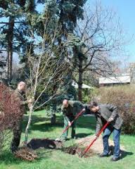Arbori noi la Pitești