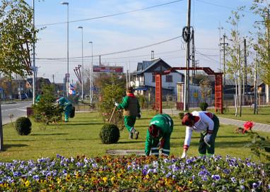 Mii de panseluțe vor înfrumuseța orașul Mioveni