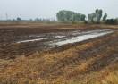 Dejecții de la o fermă de porci din oraşul Costeşti deversate în apropierea râului Teleorman