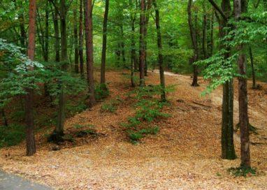 Anunţ important pentru proprietarii de păduri din Argeş