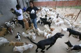 Bălileşti, comuna în care toţi câinii cu stăpân au fost microcipaţi
