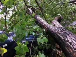 Un bărbat A MURIT strivit de un copac
