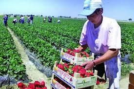 Locuri de muncă vacante pentru sectorul agricol din Spania